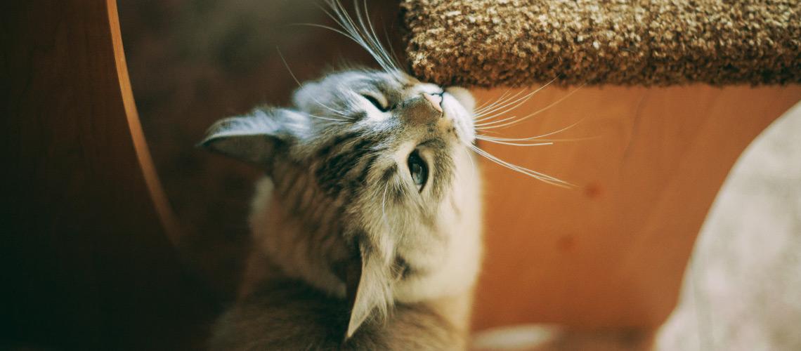 gatto-strusciarsi