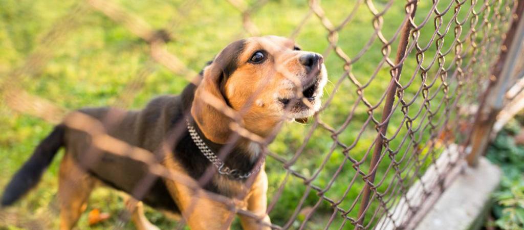 Cani Collare Antiabbaio PErché No