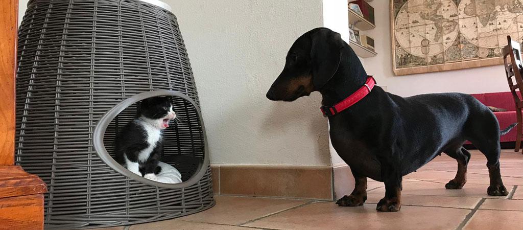 bama-pet-life-enjoy-mini-gatto-cuccia-pasha
